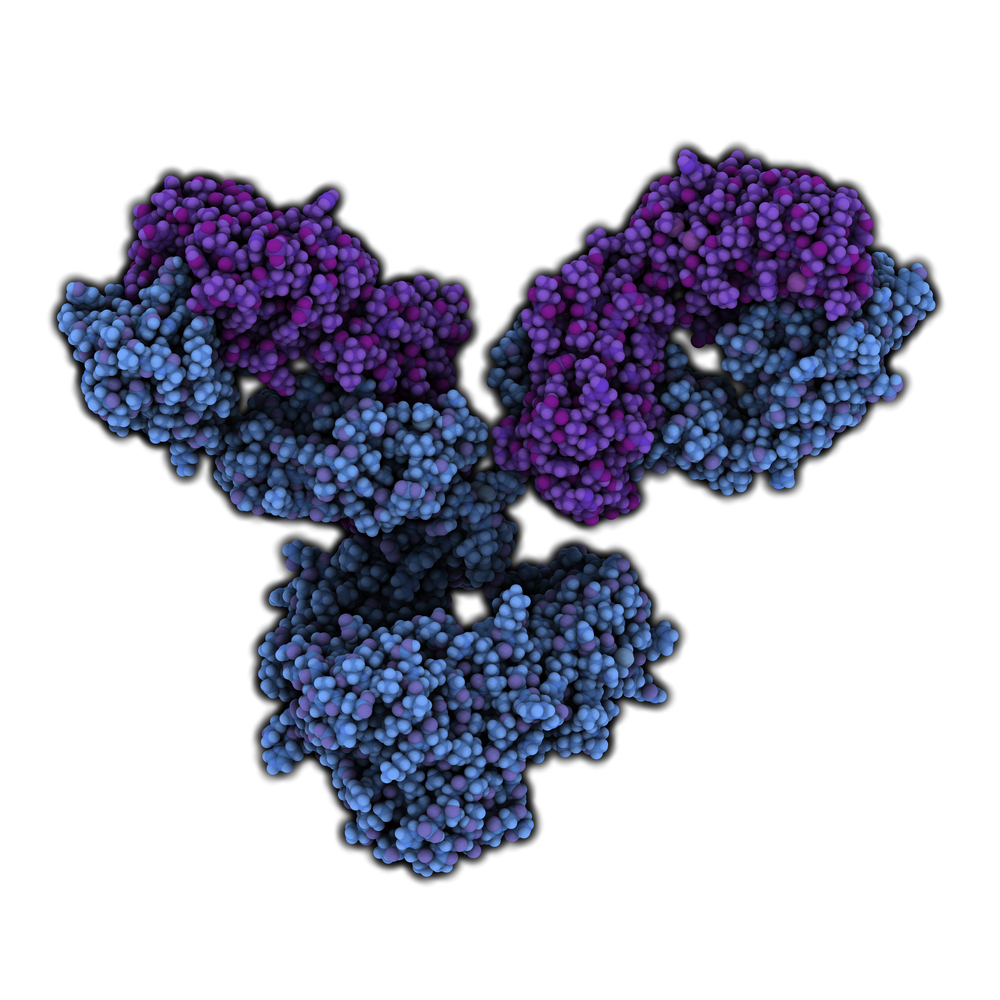 Immunotherapy Could Improve Duchenne Muscular Dystrophy Outcomes