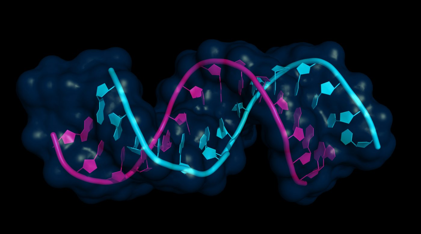 Special RNA Molecules Important in Muscular Dystrophy