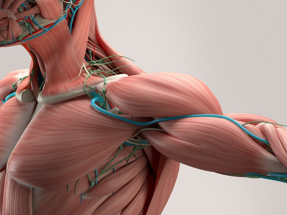 muscles, DMD patients, metabolic changes
