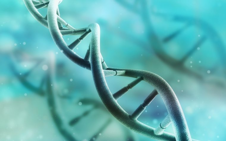 Genetic Compensation Mechanism Could Aid in Treatment of Muscle Disorders, Study Suggests