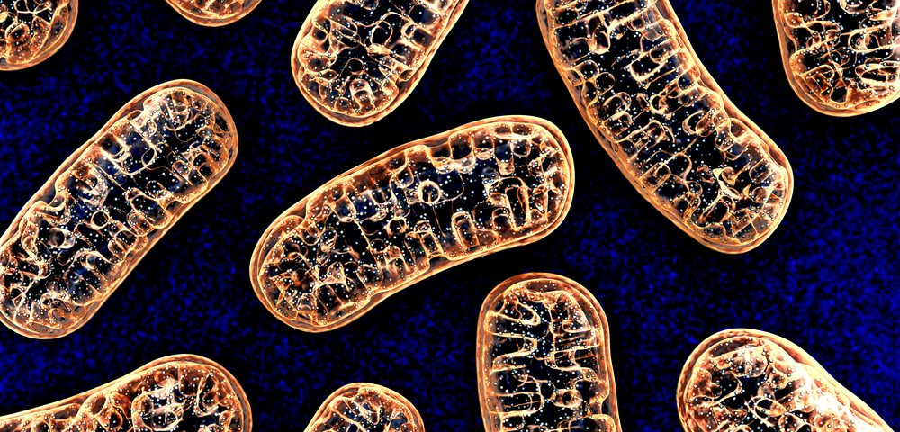 Mitochondrial Protein's Loss Linked to Muscle Weakness and Poor Repair in Early Study